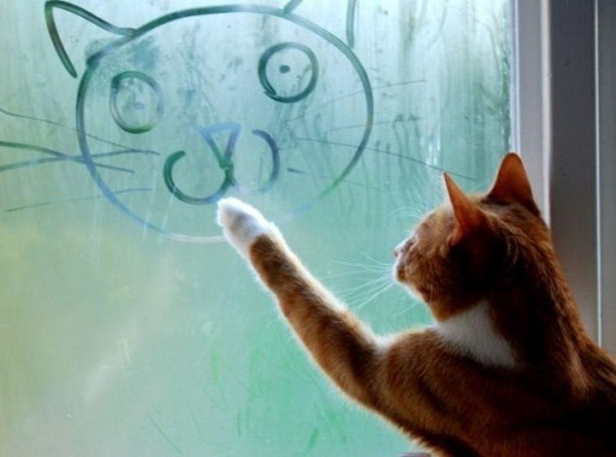 Katze6.jpg