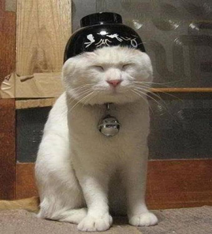 Katze7.jpg