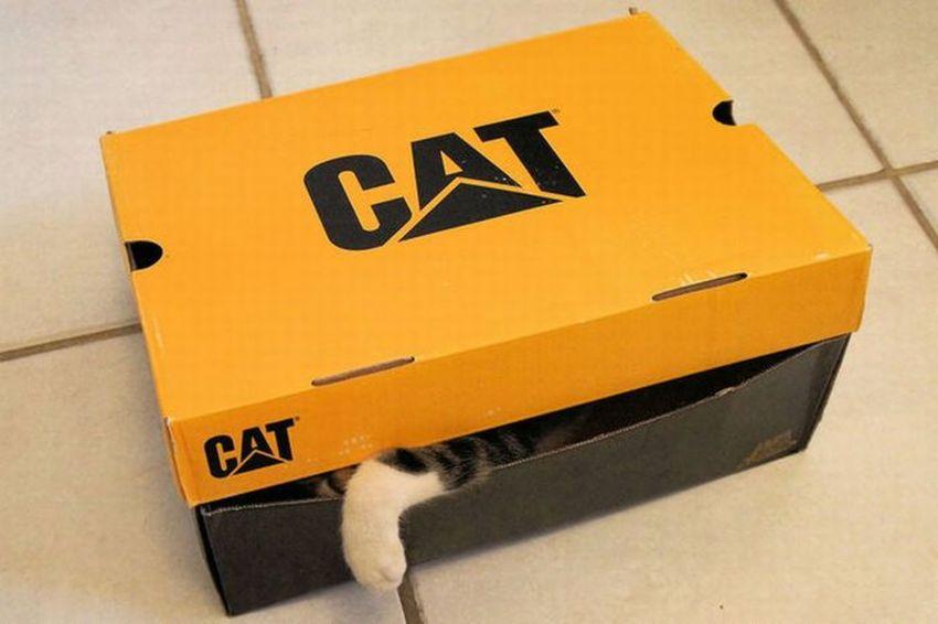 Katze8.jpg
