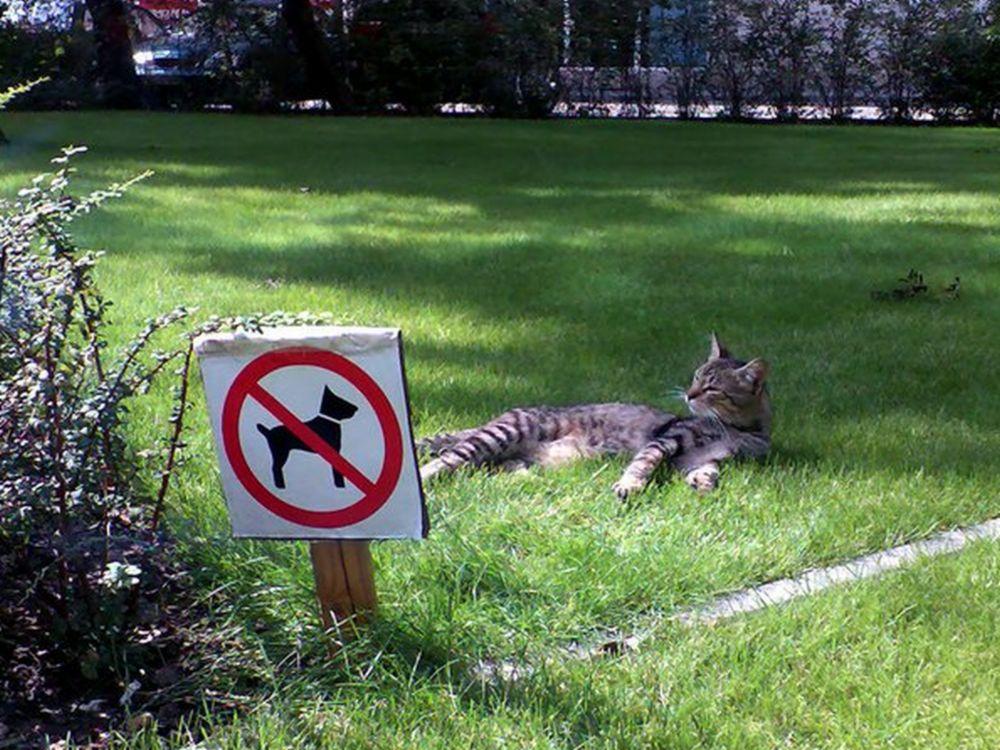 Katze9.jpg