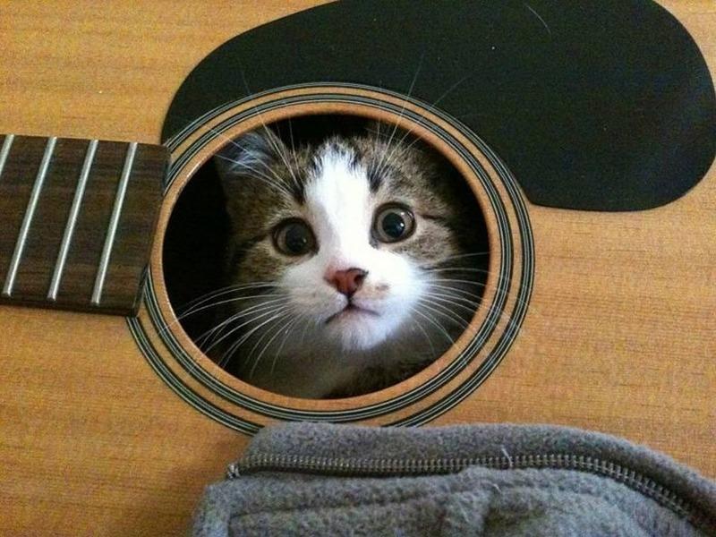Katze2.thumb.jpg.41d73f9dfbfcd2753a81104fa3691131.jpg